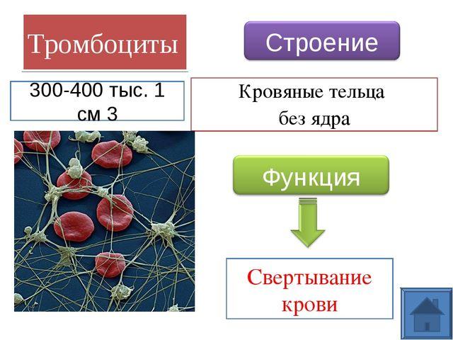 Тромбоциты Кровяные тельца без ядра Свертывание крови 300-400 тыс. 1 см 3