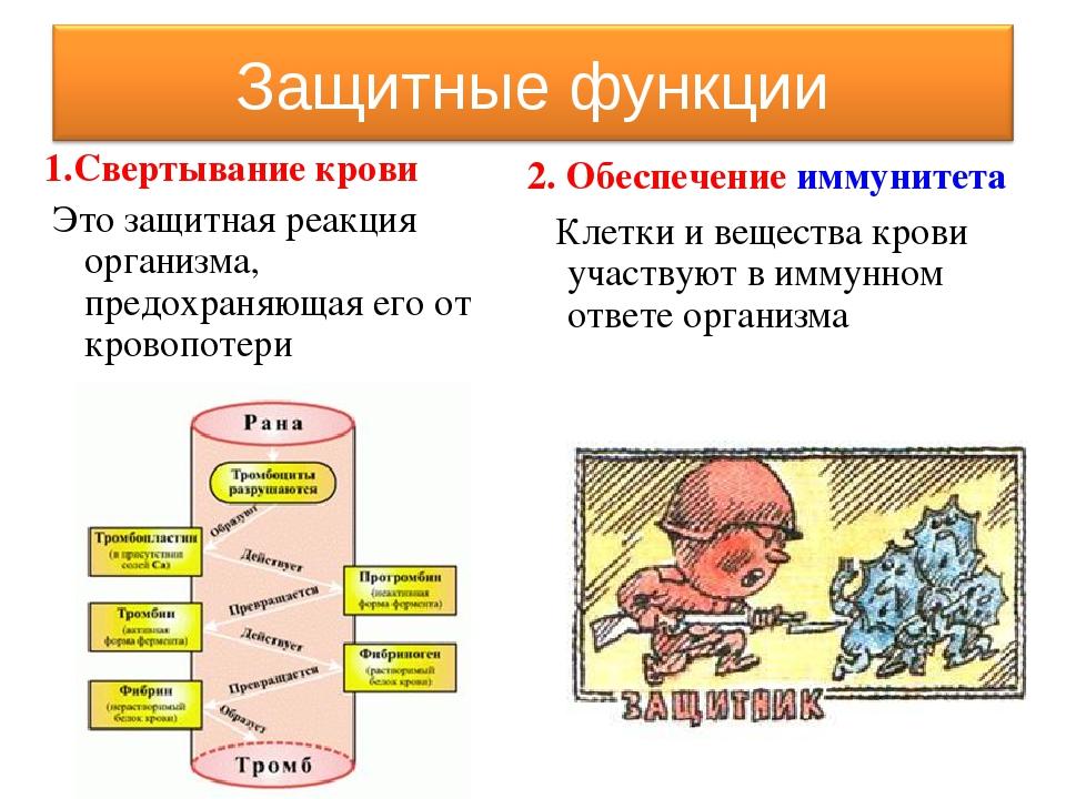 1.Свертывание крови Это защитная реакция организма, предохраняющая его от кро...