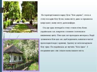 """На території нашого парку було """"біле дерево""""; хтось в степу посадив білу буз"""