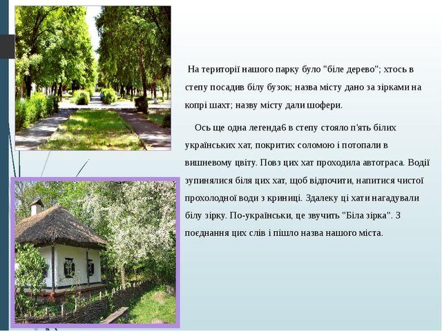 """На території нашого парку було """"біле дерево""""; хтось в степу посадив білу буз..."""