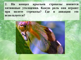 2. На концах крыльев стрекозы имеются хитиновые утолщения. Какую роль они игр