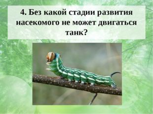 4. Без какой стадии развития насекомого не может двигаться танк? Ответ и фото