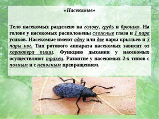«Насекомые» Тело насекомых разделено на голову, грудь и брюшко. На голове у н