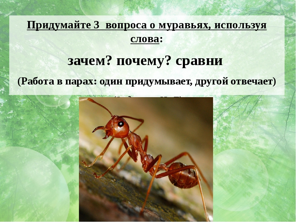 Придумайте 3 вопроса о муравьях, используя слова: зачем? почему? сравни (Рабо...