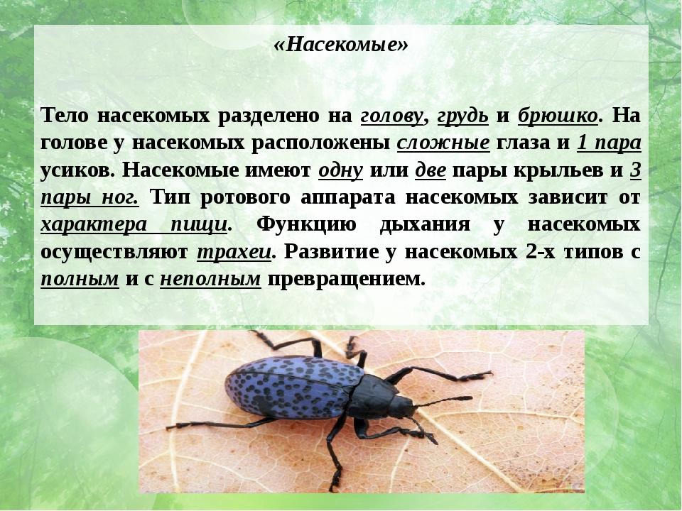 «Насекомые» Тело насекомых разделено на голову, грудь и брюшко. На голове у н...