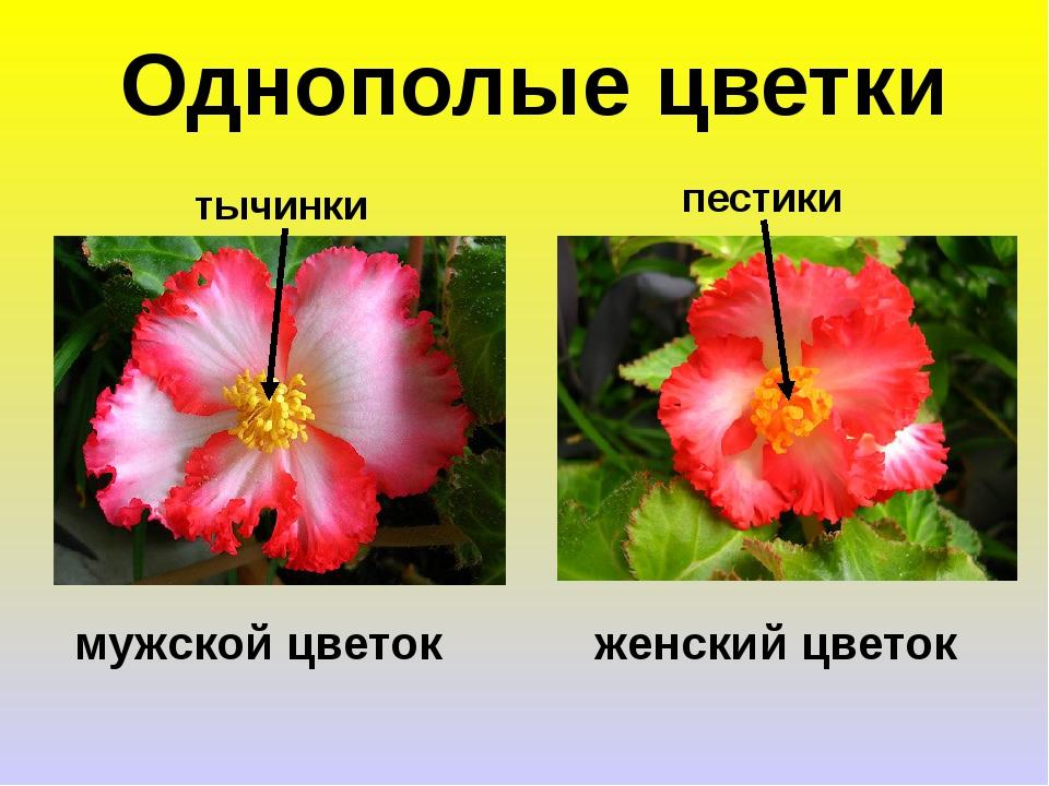 Что такое однополый цветок