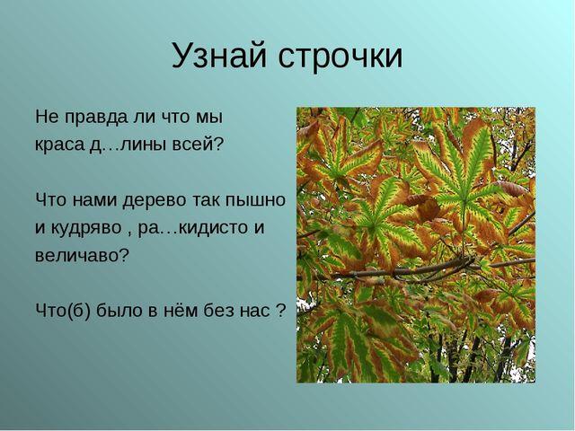 Узнай строчки Не правда ли что мы краса д…лины всей? Что нами дерево так пышн...