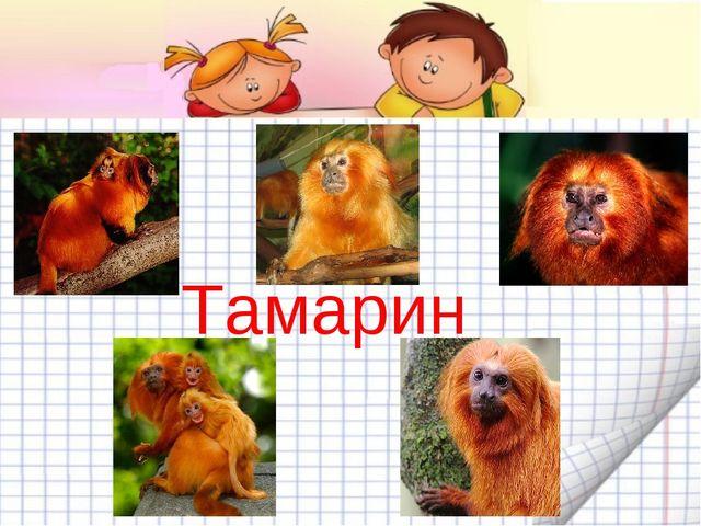 Тамарины