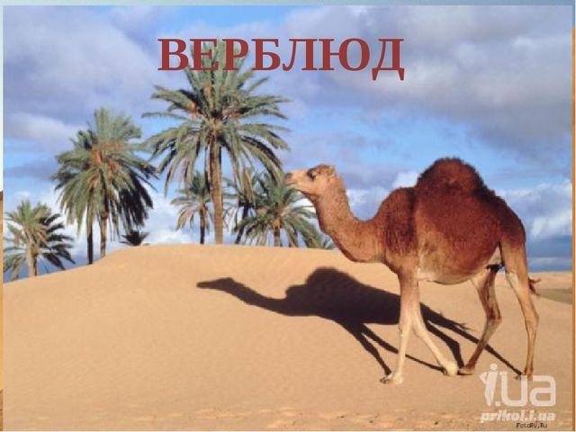 Формирование представления о природной зоне пустынь. Задание 1 (З) Разгадайте...