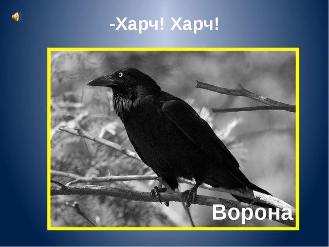 Ворона -Харч! Харч!