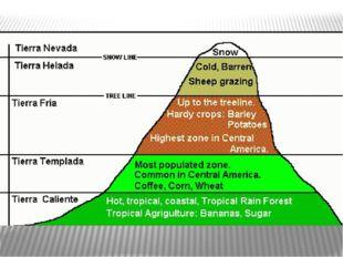 Над нижним жарким горным поясом до высоты 2500-3000 м расположен умеренный п