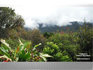 нефелогилея, состоящая из низкорослых и искривленных деревьев и кустарников.