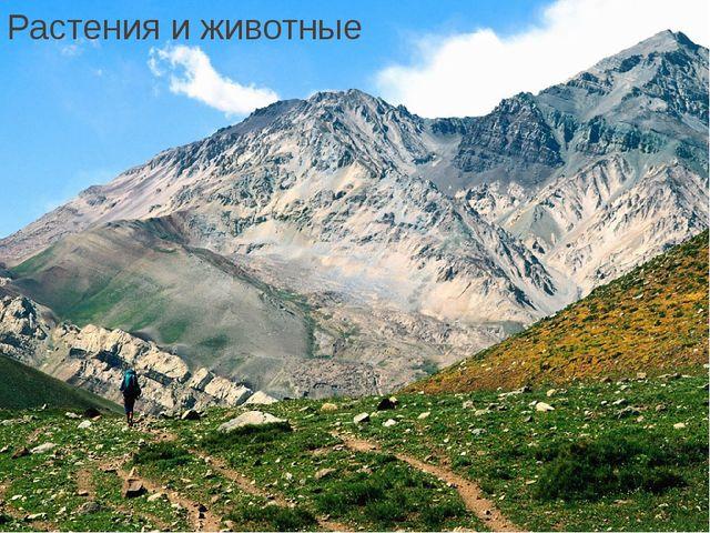 Растения и животные Растительность и животные.Весьнижний пояс гор, называе...