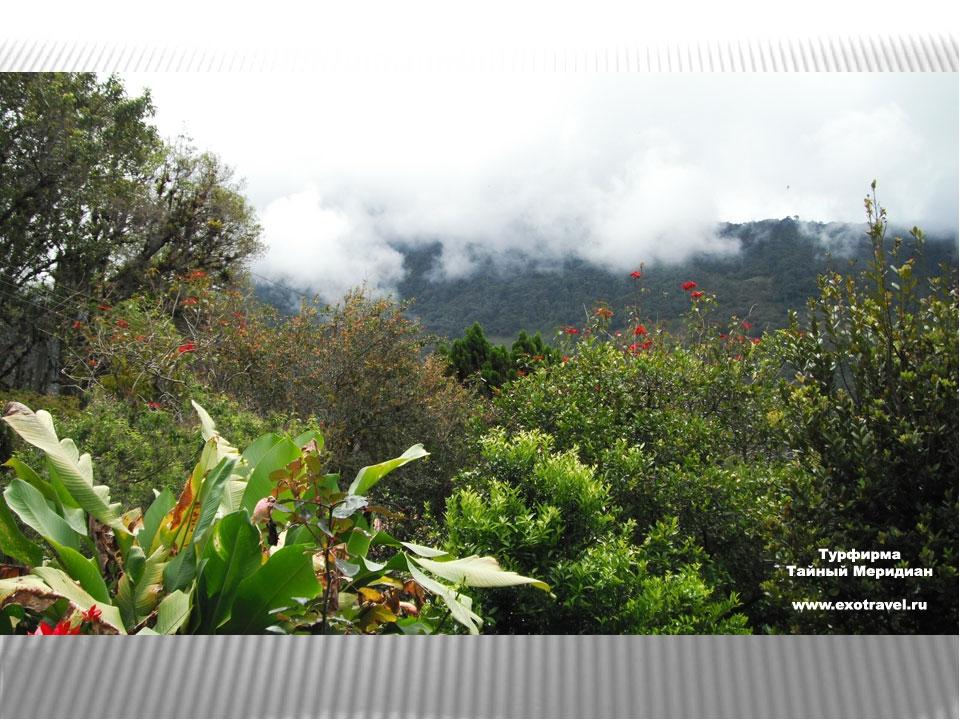 нефелогилея, состоящая из низкорослых и искривленных деревьев и кустарников....