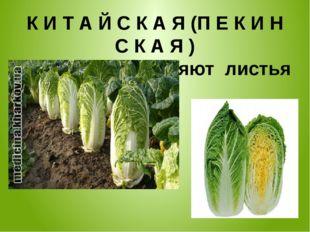 К И Т А Й С К А Я (П Е К И Н С К А Я ) в пищу употребляют листья