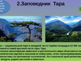 2.Заповедник Тара Тара—национальный паркв западной части Сербииплощадью