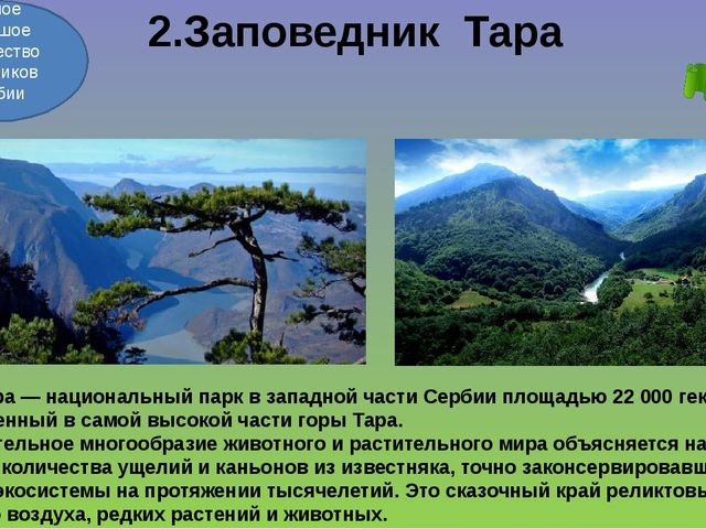 2.Заповедник Тара Тара—национальный паркв западной части Сербииплощадью...