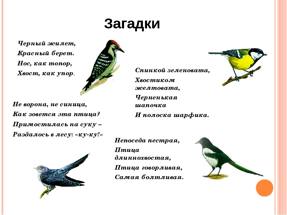 загадки о птицах в картинках детям год быстро для