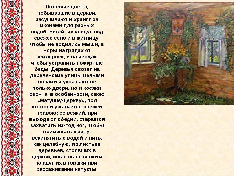 Полевые цветы, побывавшие в церкви, засушивают и хранят за иконами для разных...