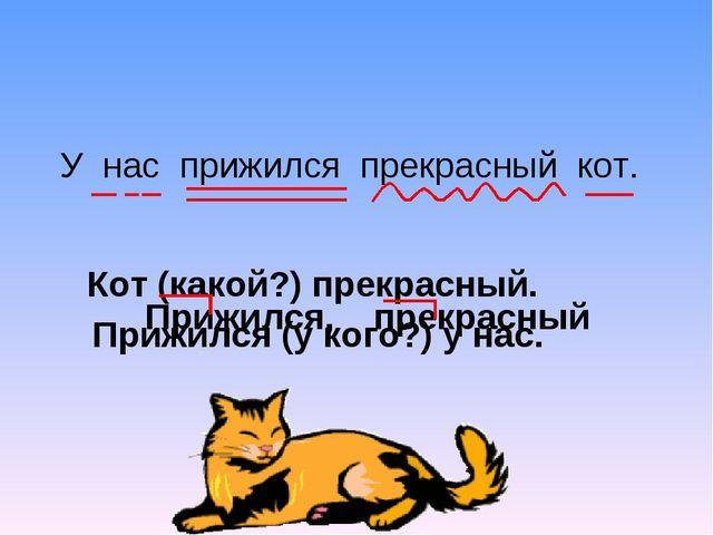 У нас прижился прекрасный кот. Кот (какой?) прекрасный. Прижился (у кого?) у...