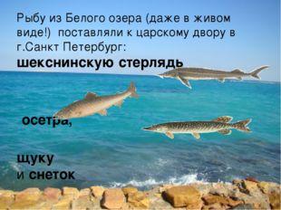 Рыбу из Белого озера (даже в живом виде!) поставляли к царскому двору в г.Сан