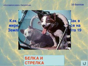 «Космическая» биология 10 баллов Как звали самых известных собак в мире, благ