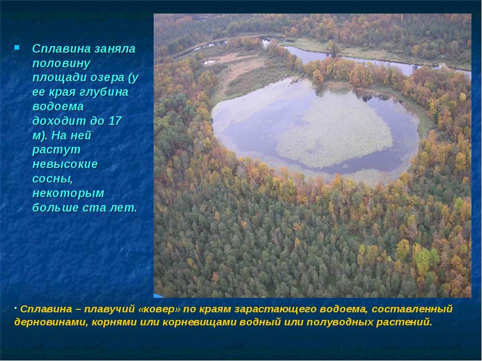 Сплавина заняла половину площади озера (у ее края глубина водоема доходит до...
