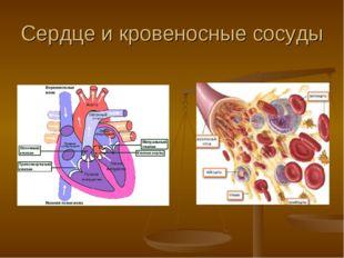 Сердце и кровеносные сосуды