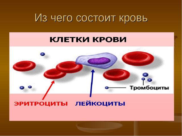 Из чего состоит кровь