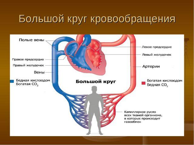 Большой круг кровообращения
