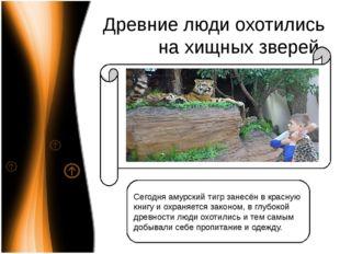 Древние люди охотились на хищных зверей Сегодня амурский тигр занесён в красн