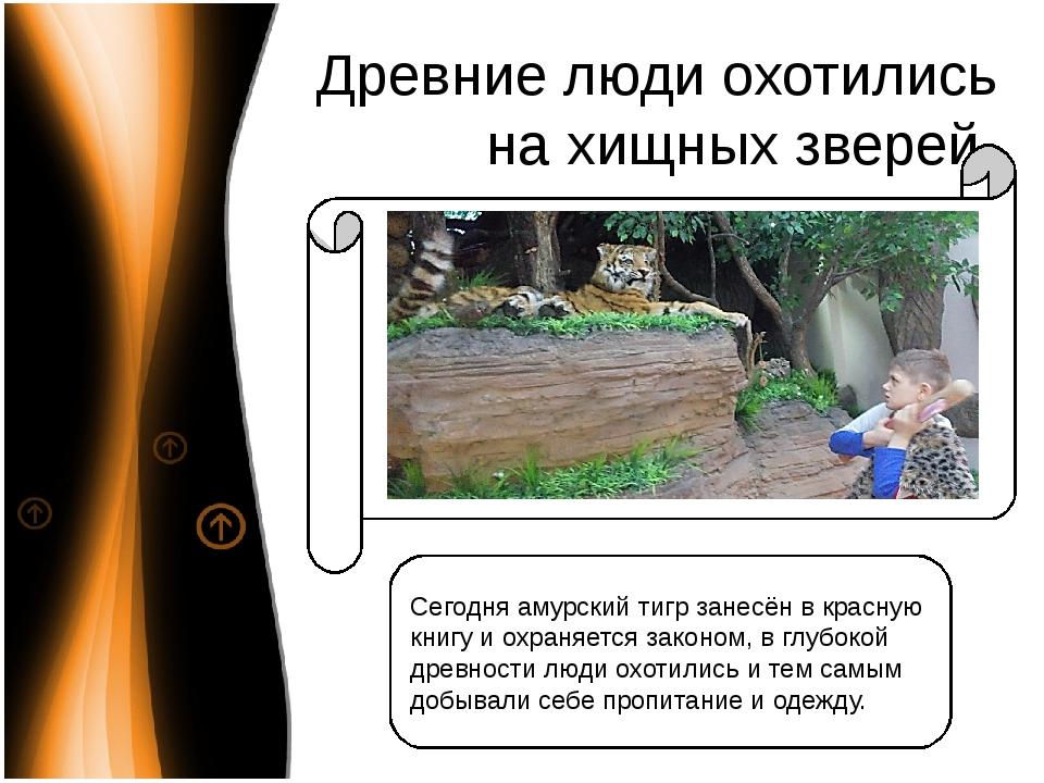 Древние люди охотились на хищных зверей Сегодня амурский тигр занесён в красн...