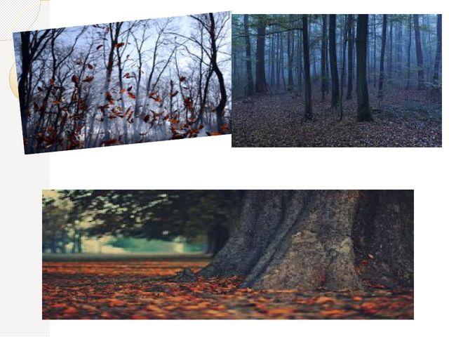 Листья кружатся у ног.