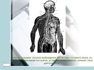 Никотин вызывает сильное возбуждение клеток коры головного мозга, но через не