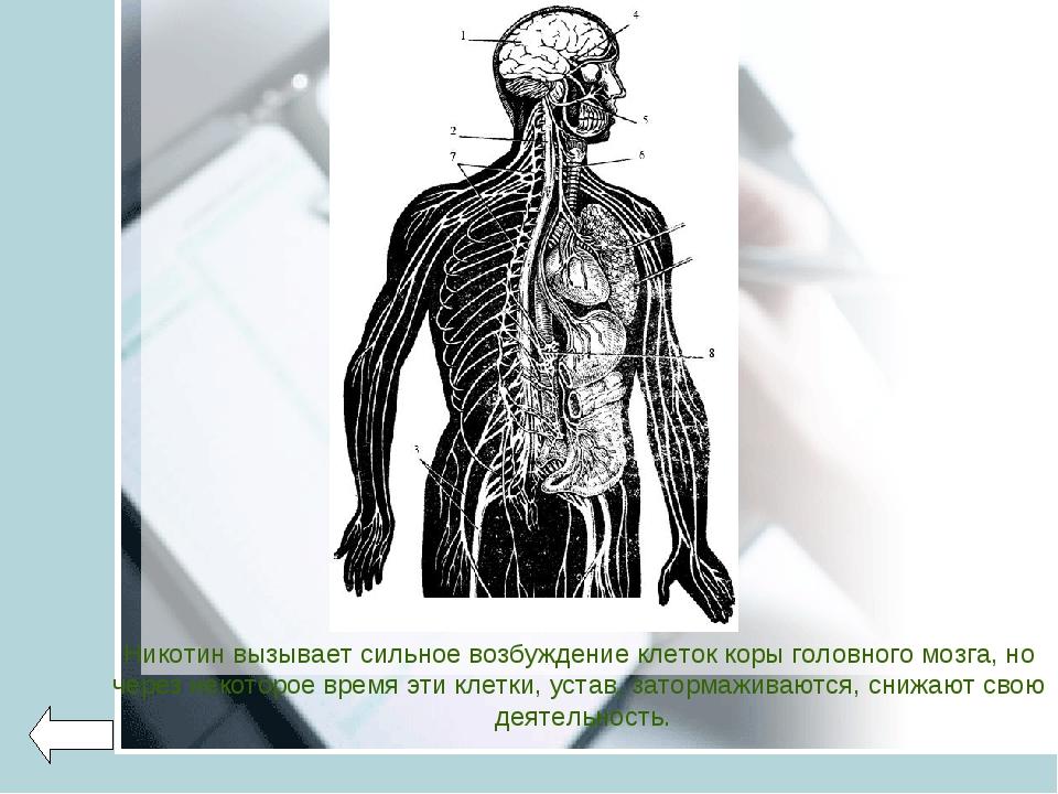 Никотин вызывает сильное возбуждение клеток коры головного мозга, но через не...