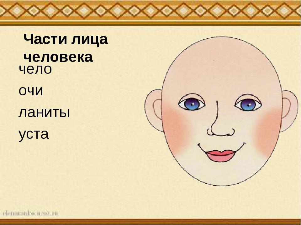 Части лица человека чело очи ланиты уста