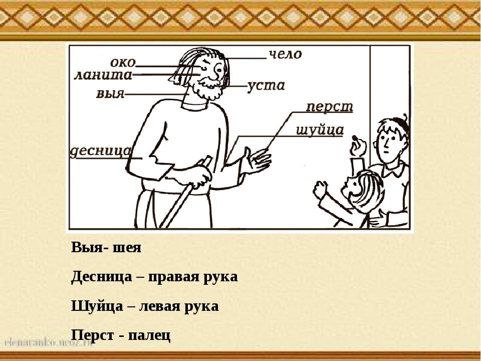 Выя- шея Десница – правая рука Шуйца – левая рука Перст - палец