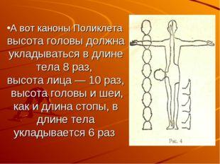 А вот каноны Поликлета высота головы должна укладываться в длине тела 8 раз,