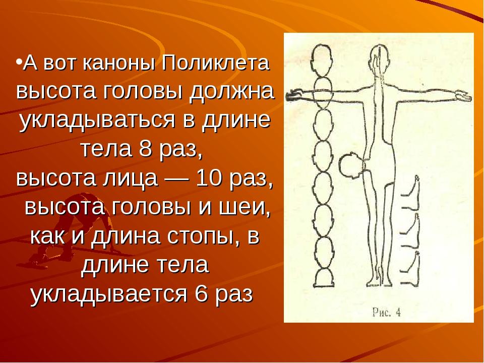 А вот каноны Поликлета высота головы должна укладываться в длине тела 8 раз,...