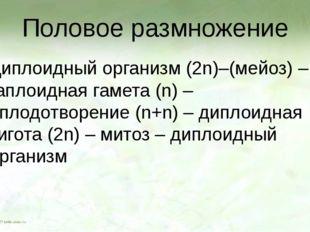 Половое размножение Диплоидный организм (2n)–(мейоз) – гаплоидная гамета (n)