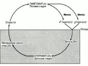 Чередование жизненного цикла: Растения имеют отличное свойство от других орг