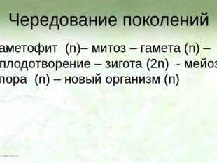 Чередование поколений Гаметофит (n)– митоз – гамета (n) – оплодотворение – зи