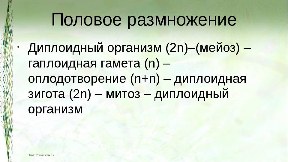 Половое размножение Диплоидный организм (2n)–(мейоз) – гаплоидная гамета (n)...