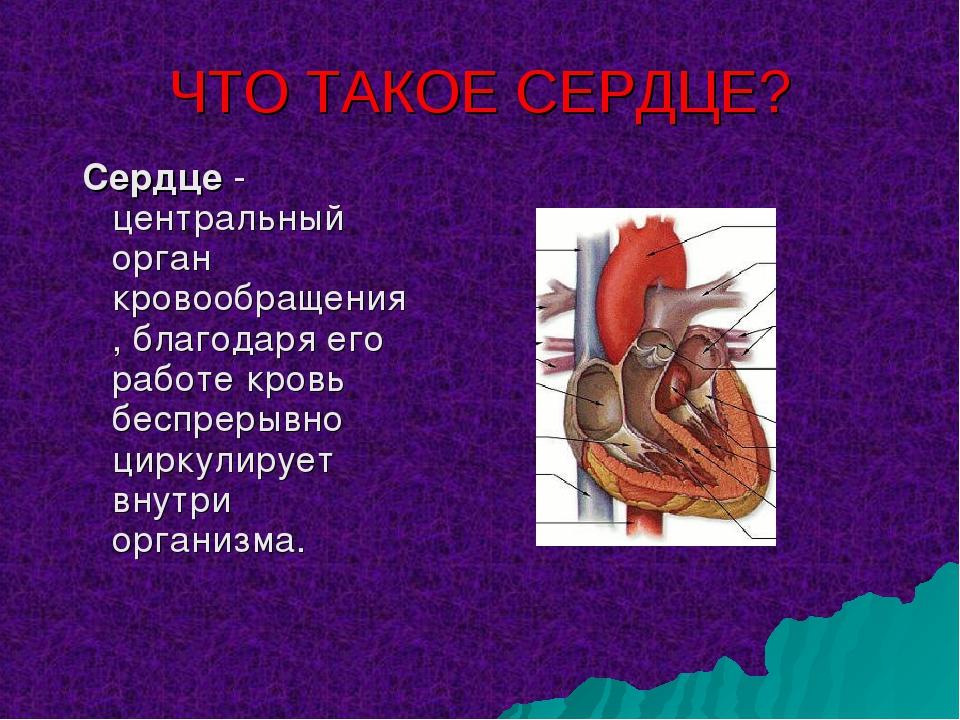 ЧТО ТАКОЕ СЕРДЦЕ? Сердце - центральный орган кровообращения, благодаря его ра...