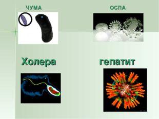 Холера гепатит ЧУМА ОСПА