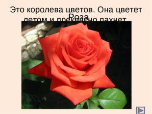 Это королева цветов. Она цветет летом и прекрасно пахнет. Роза