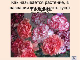 Как называется растение, в названии которого есть кусок железа? Гвоздика