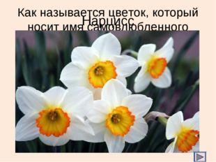 Как называется цветок, который носит имя самовлюбленного принца? Нарцисс