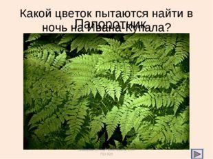Какой цветок пытаются найти в ночь на Ивана-Купала? Папоротник Кравцова Елена