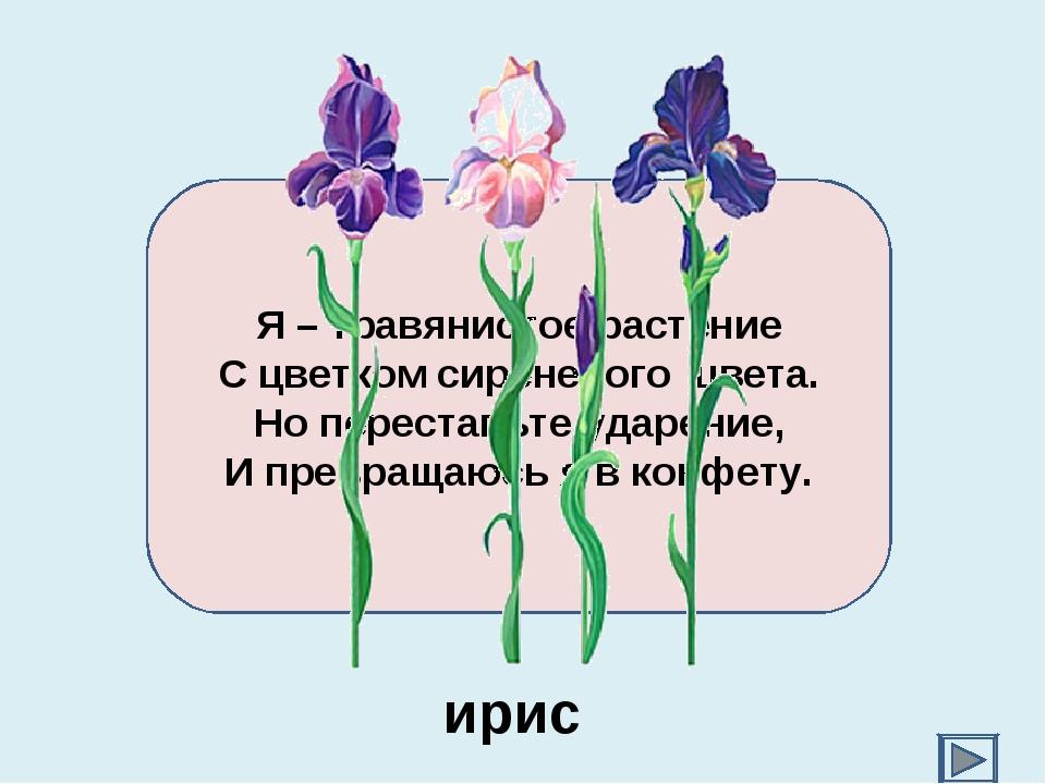 Я – травянистое растение С цветком сиреневого цвета. Но переставьте ударение,...